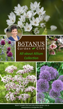 All About Allium Collection