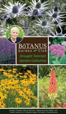 Drought Tolerant Collection
