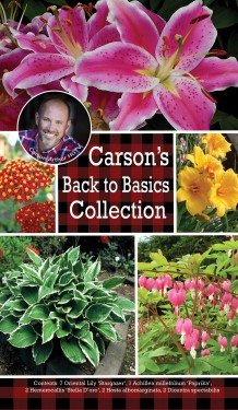 Carson's Back to Basics Collection