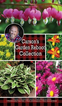 Carson's Garden Reboot Collection