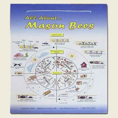 Mason Bee Lifecycle Poster