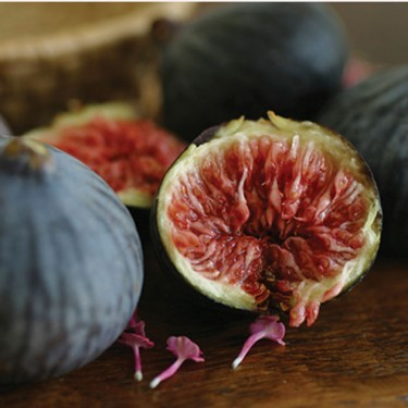 Hardy Fig 'Chicago'