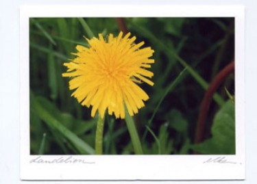 Dandelion Card Set