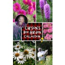 Carson's Bee Garden Collection