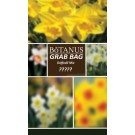 Botanus Grab Bag-Daffodil Mix