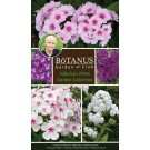 Fabulous Phlox Garden Collection
