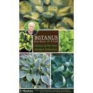 Hostas of the Year Garden Collection