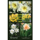 Bradner Daffodil Collection