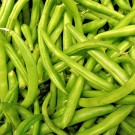Bean Green 'Tendergreen'-Aimer's Organic Seed