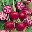 Beet 'Chioggia Guardsmark'-Aimers Organic Seed