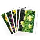 Tulips a la carte Card Set