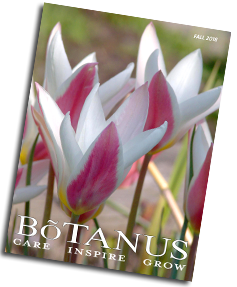 Botanus Fall 2018 Catalogue