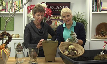 95-How to Plant & Grow Amaryllis